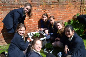 St Mary's School for Girls, Colchester has been shortlisted for a prestigious national Independent School Award, recognising the school's commitment to promoting environmental sustainability in the local community.