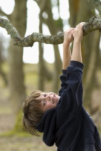 Child in a tree at Brownsea Island, Poole harbour, Dorset